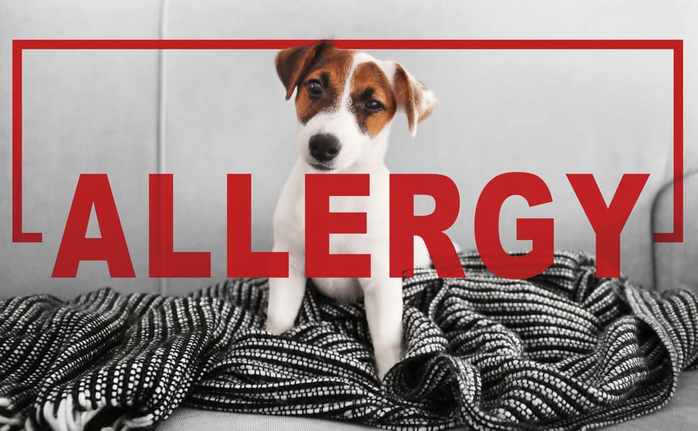 Dog Skin Allergy Causes