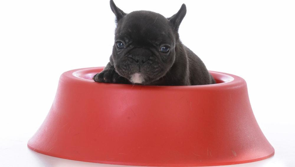 French Bulldog Puppy Food