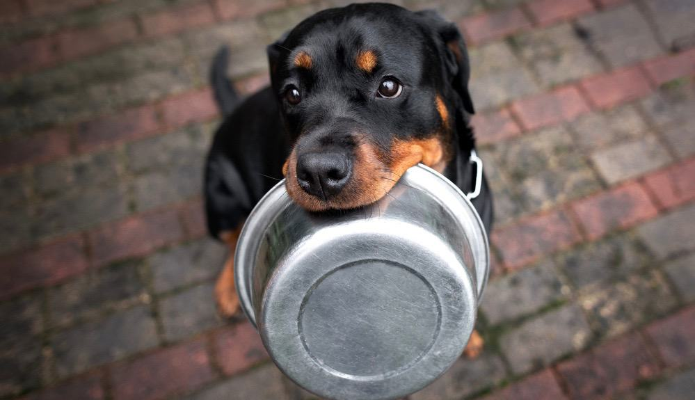 Best Food For Rottweiler