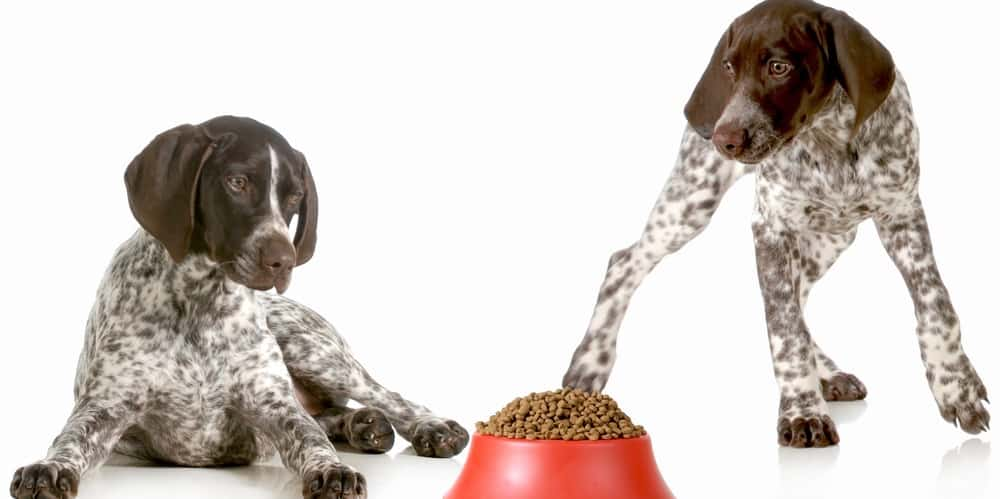How Much To Feed German Shorthaired Pointer