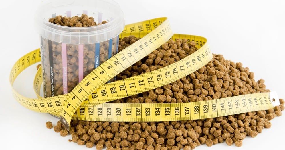 Goldendoodle Nutrition