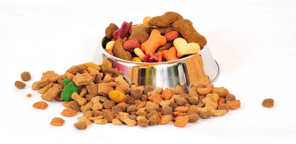 Best Food For Labradoodle Puppy