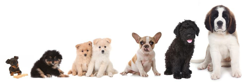 Puppy Growth Rate