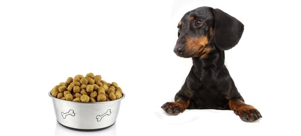 Best Dog Food For Dachshund Puppy