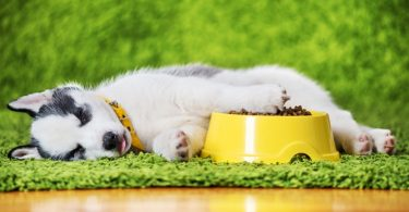 Best Food For Husky Puppy