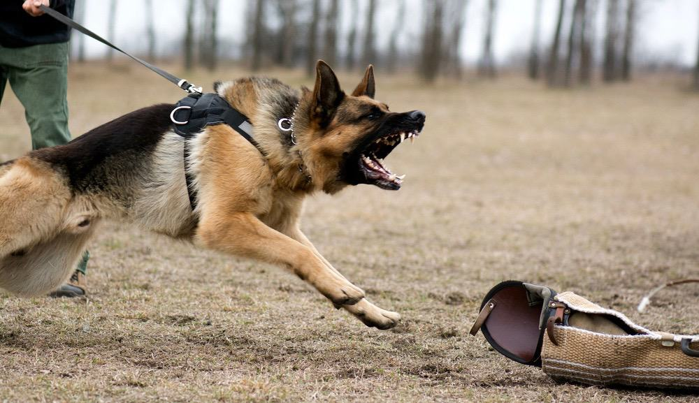 How Strong Is A German Shepherd Bite Severity