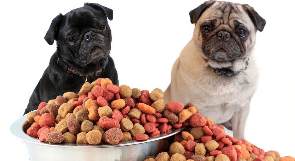 Pug Puppy Feeding Schedule