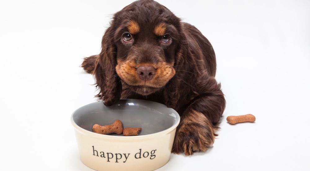 How Much To Feed A Cocker Spaniel Puppy