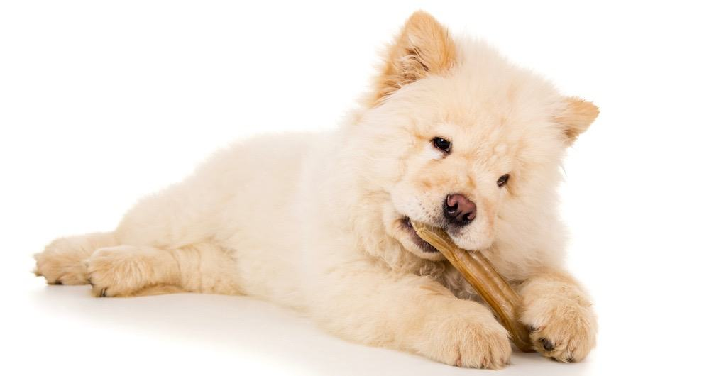 Chow Chow Nutrition