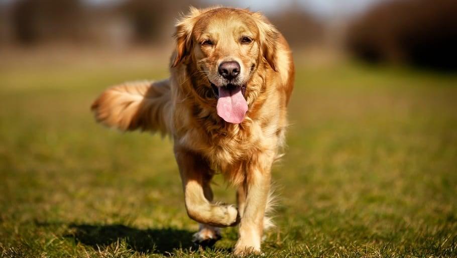 Dog Tongue Anatomy