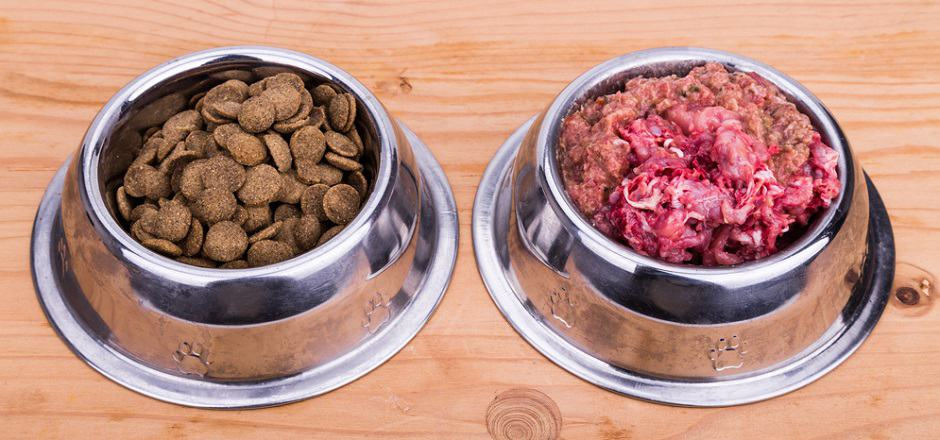 Kibble To Raw Food Transition
