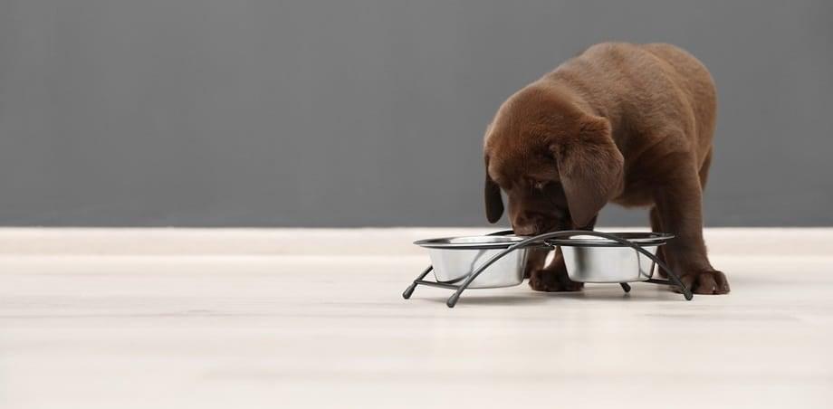 Lab Puppy Nutrients