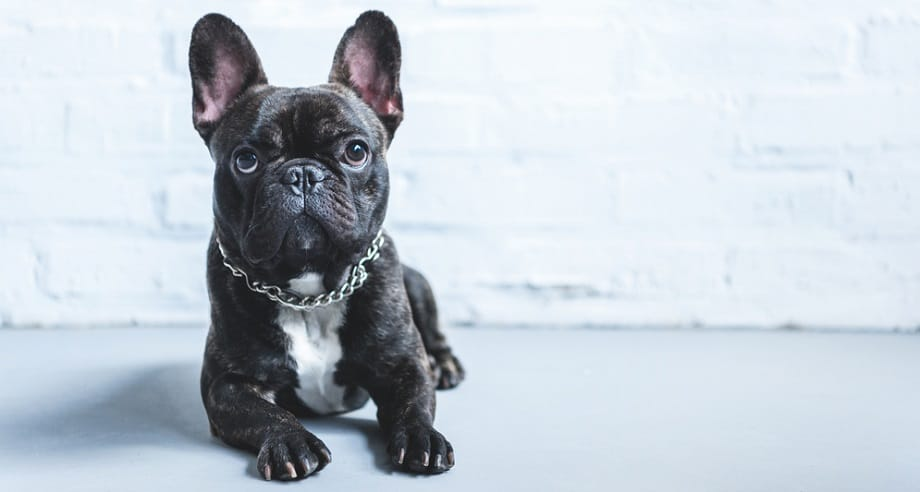 Measuring Collar Size Chart For Dogs